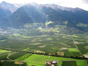 Orchards in the Vinschgau